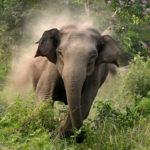 सुनसरीमा जंगली हात्तीको आक्रमणबाट महिलाको मृत्यु